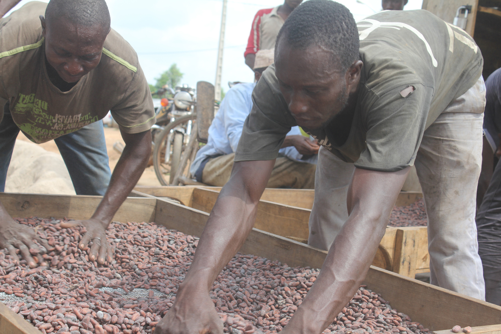 Côte d'Ivoire cocoa farmers are boosting yields through certification schemes