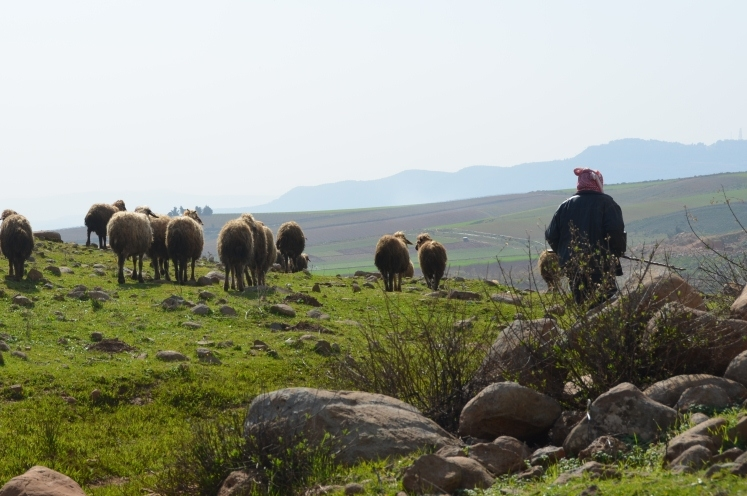 A shepherd tends to his flock of sheep near Wazzani village, south Lebanon, right next to the Israeli border. Southern Lebanon has struggled to develop because of constant occupation and conflict