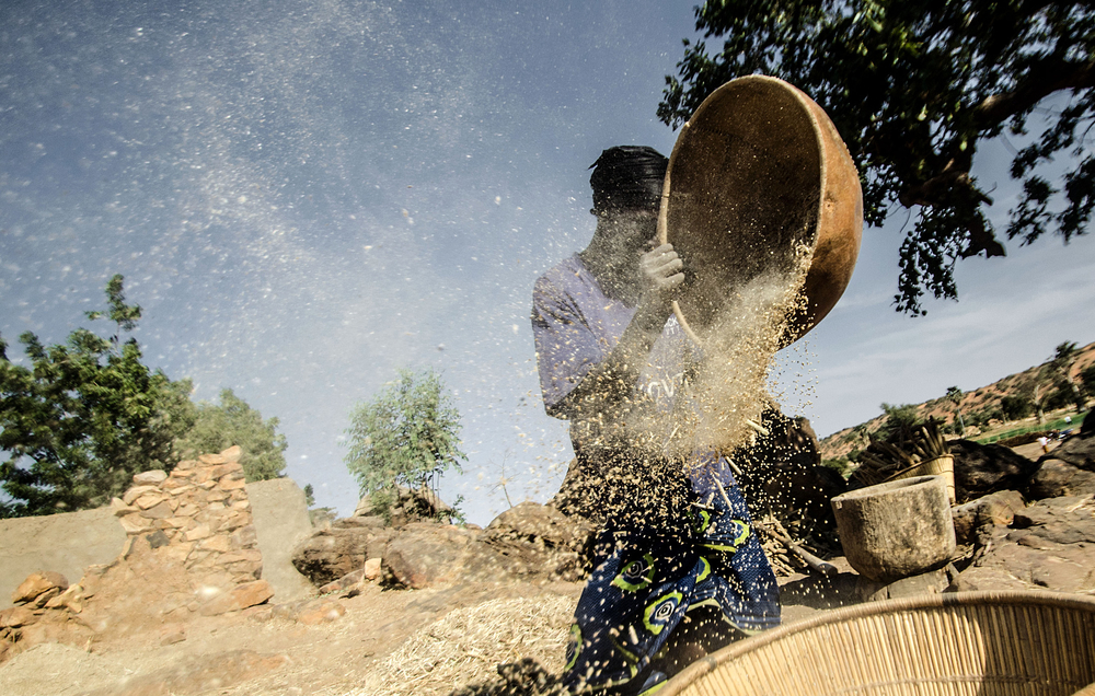 Millet preparation in Bandiagara, Mopti Region of Mali. The crop has been hit by a succession of poor harvests.