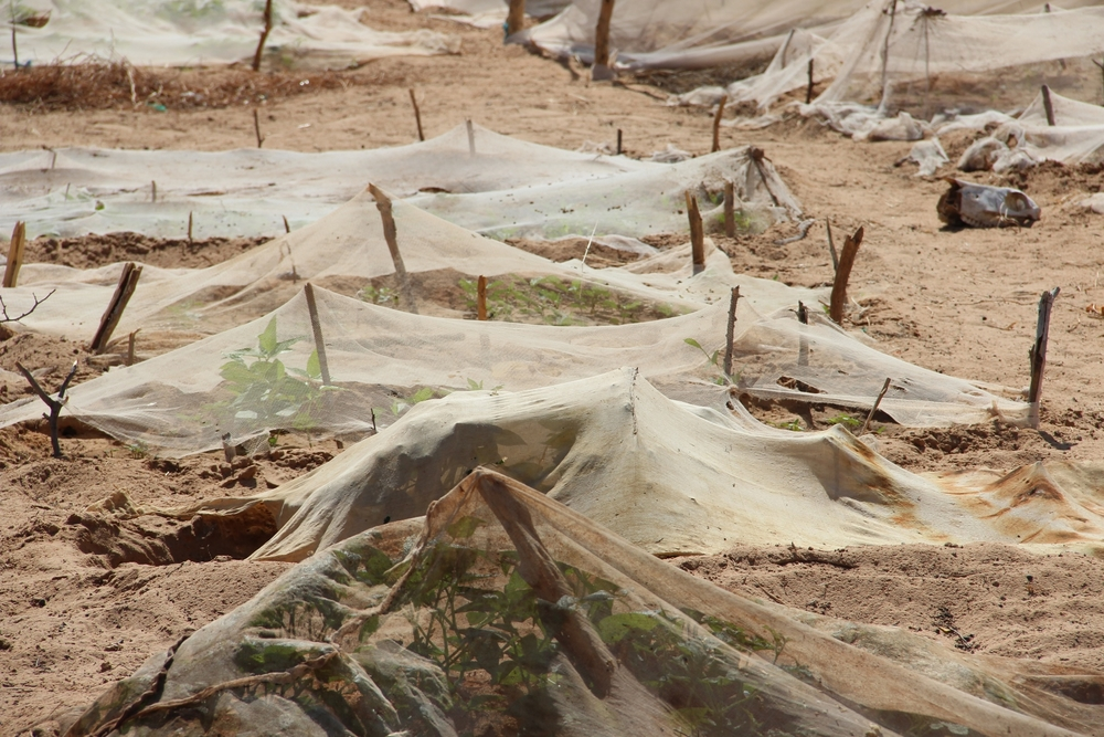 Women who live in Seyinna Gababe village, 18km from Kaedi, in Mauritania, try to grow market gardens but they are almost impossible to protect from pests and animals.