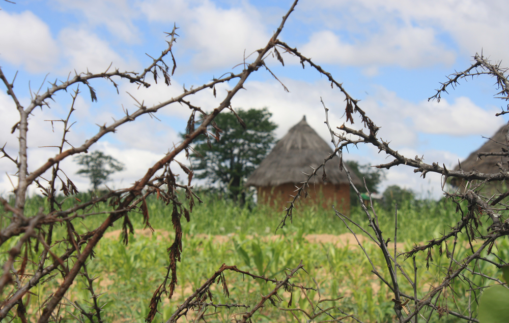 A homestead in the Takavarasha area in in Chivi district in Zimbabwe's Masingo province