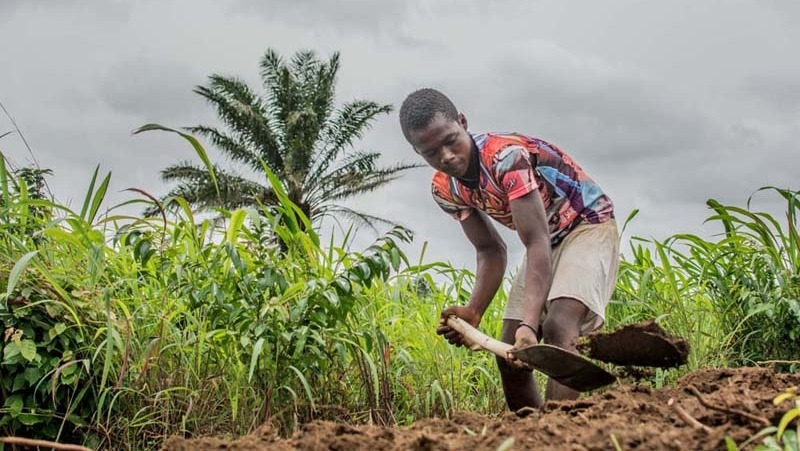 A farmer from Mansantigie village in Sierra Leone works his fields during the Ebola outbreak.