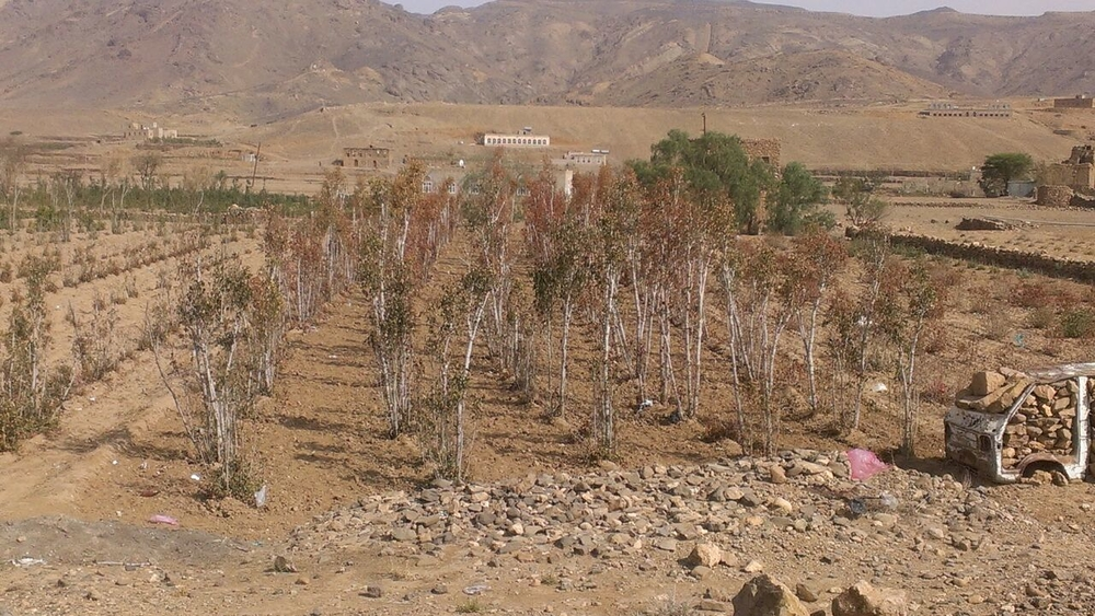 Many farmers in Yemen have lost their crops this year due to water shortages