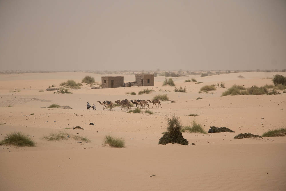 Camel caravan trudging through the Sahara outside Timbuktu