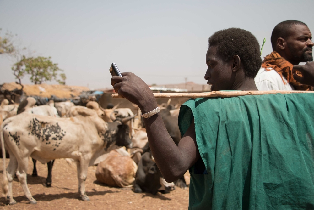 IRIN: Fulani pastoralist boy at a livestock market in Bamako