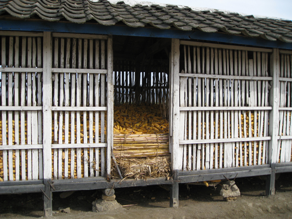 A cooperative farm storage filled with corn from an early harvest in Hamhung, North Korea