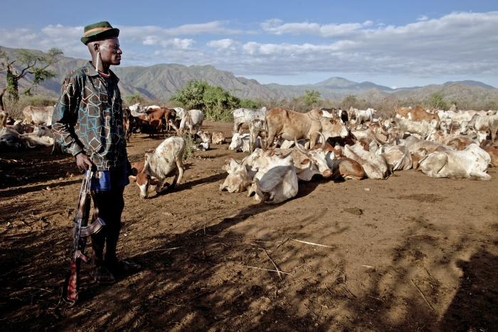 e4fa6198c5d68 Photo  Gwenn Dubourthoumieu IRINCattle rustling in Kenya s Turkana district  has become big business as demand for meat increases