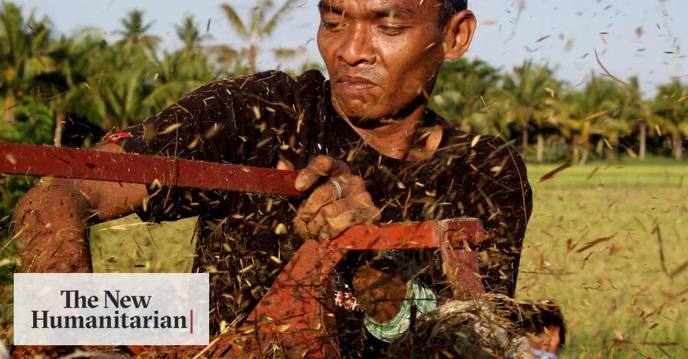 The New Humanitarian Filipino Farmers A Dying Breed