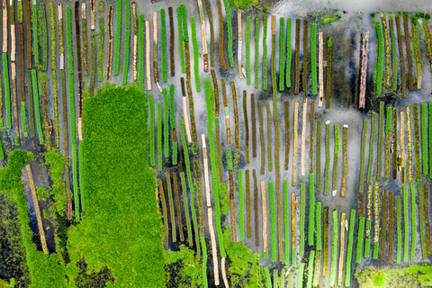Aerial photo of floating farms in Bangladesh.