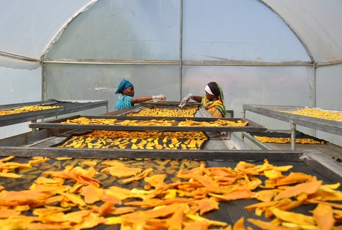 Members of the Huruma Asili women's cooperative in eastern Kenya's Makueni county lay out mangoes for drying in a plastic covered shed