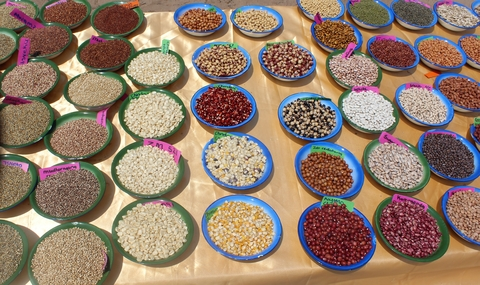 Bowls of different seeds