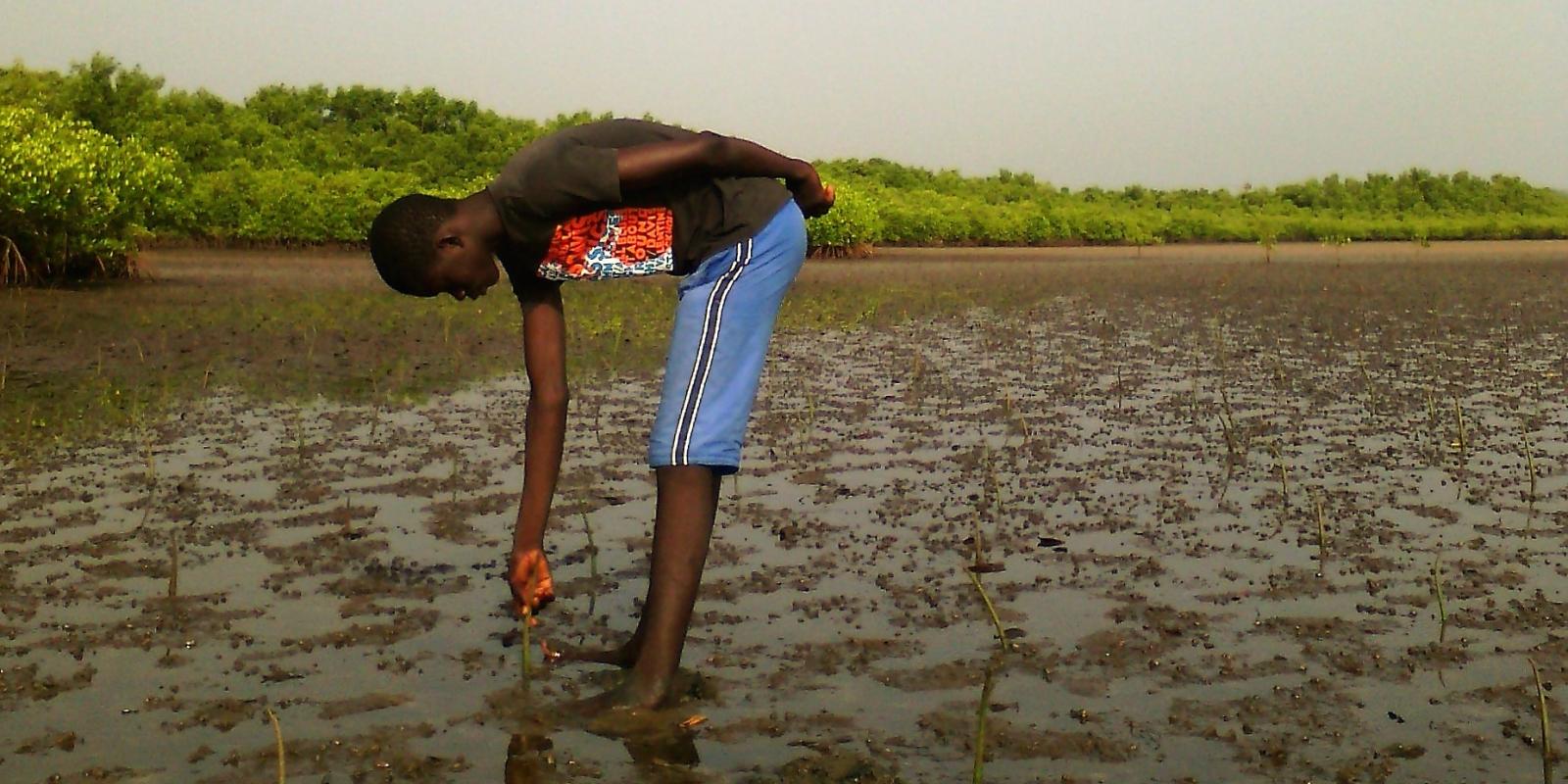 planting_mangroves_in_sine-saloum_delta.jpg?64qe8uFpIKtYIp9GOlaBwr5KwLJy50Ln&itok=4Xp4_KfV