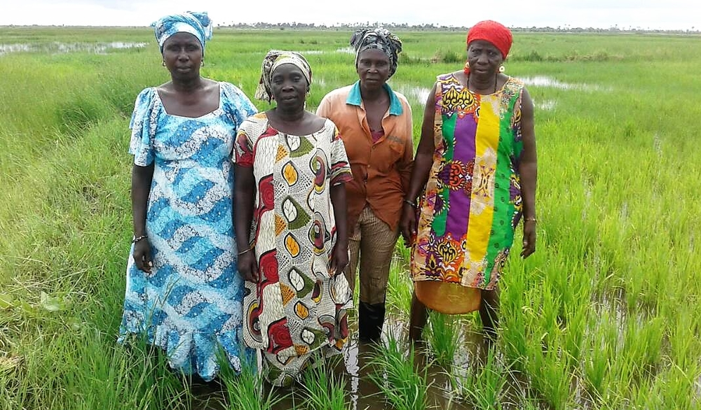 Women in the Senegalese village of Dioffior in a rice field
