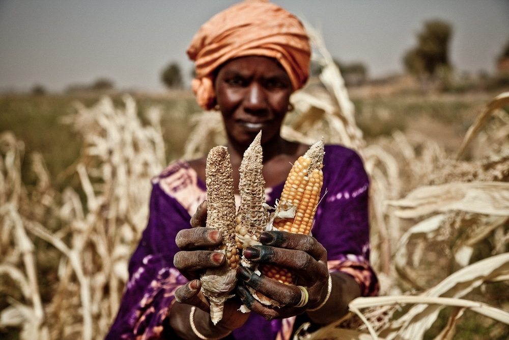 e-book: reporting on climate change and food security