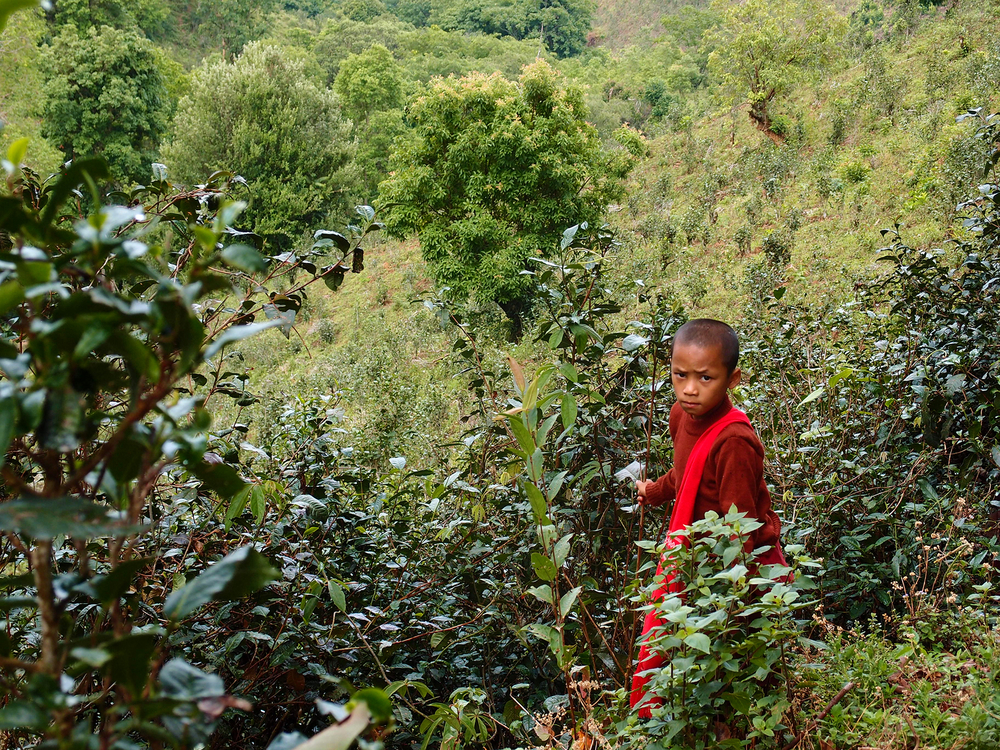 Photo of a child wearing red in Myanmar on a tea plantation near landmines.
