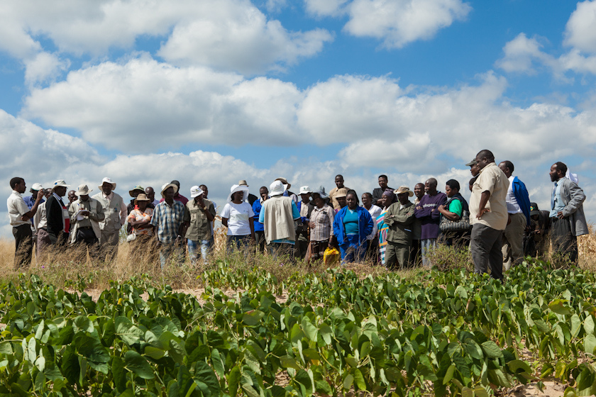 Farmers in Zimbabwe visit other farmers' fields to look at feed technologies.